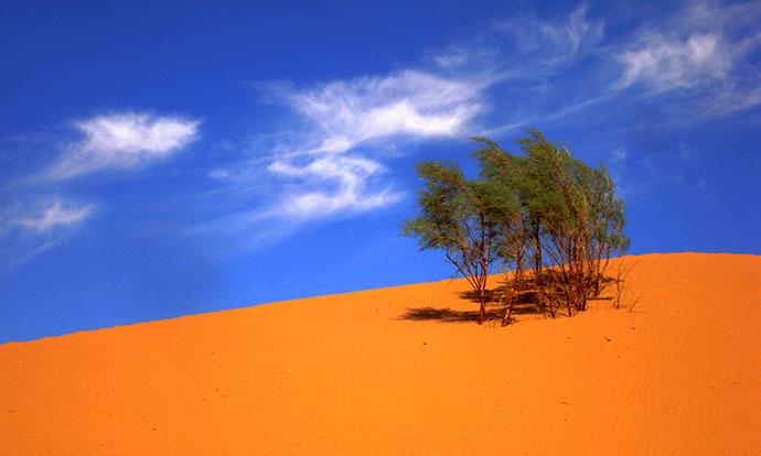 沙坡头庄园